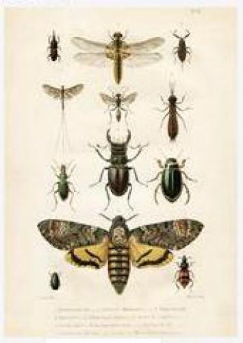Klappkarte Vintage Insekten mit Kuvert