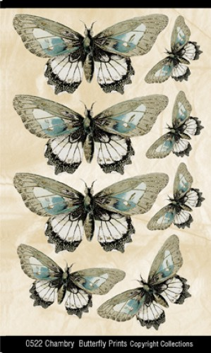 Chambry Butterfly Prints Schmetterlinge