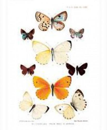 Klappkarte Vintage Schmetterlinge mit Kuvert