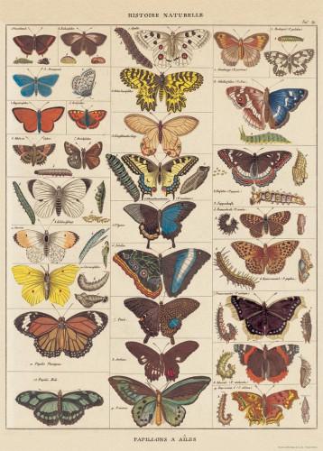 Geschenkpapier Historic Butterflies Schmetterlinge