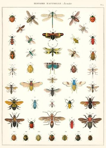 Geschenkpapier History Insects / Insekten