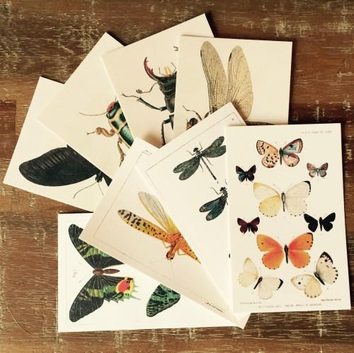 8 kleine Karten Vintage Insekten Schmetterlinge